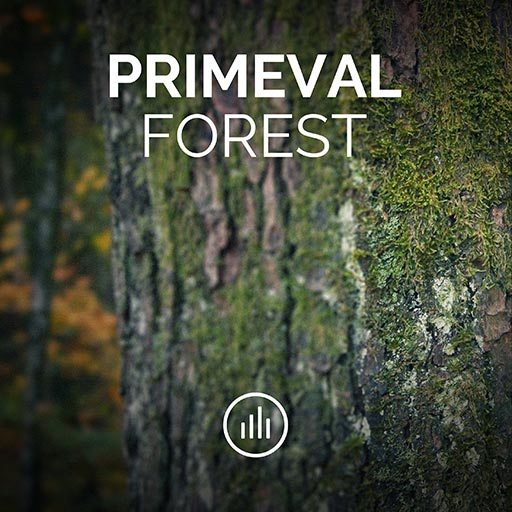 Primeval Forest • Relaxing Forest Ambience